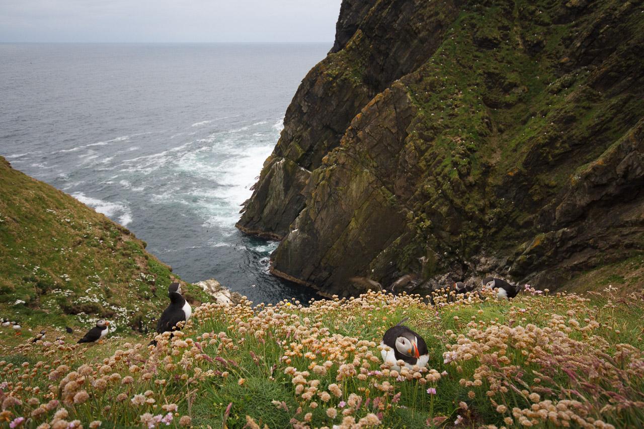 shetland-1
