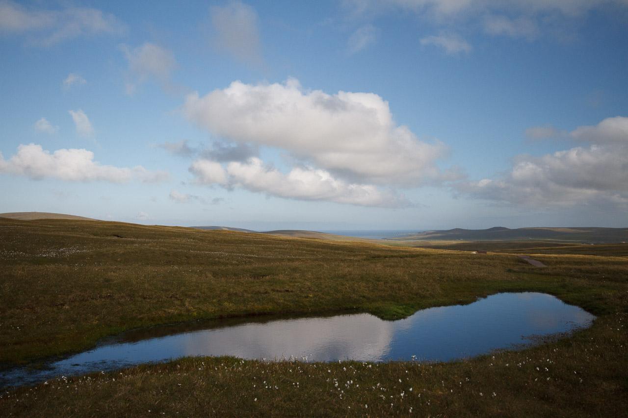 shetland-7
